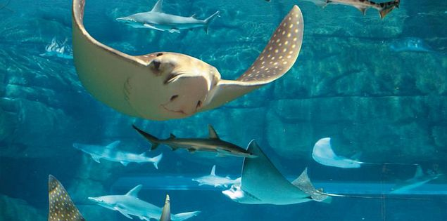 Discover endless adventure at aquariums in Myrtle Beach!